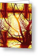 Harmonious Colors - Sunset Greeting Card