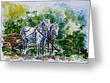 Harnessed Horses Greeting Card