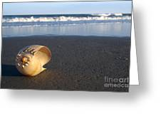 Harp Shell On Beach Greeting Card