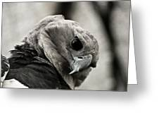 Harpy Eagle Closeup Greeting Card