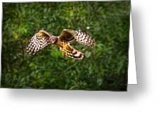 Harrier Hunt Greeting Card