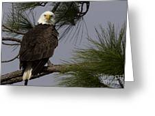 Harriet The Bald Eagle Greeting Card