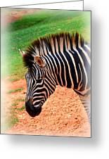 Hartman Zebra Greeting Card