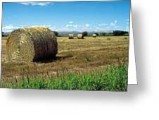 Harvest 3 Greeting Card