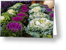 Harvest Cabbage Greeting Card