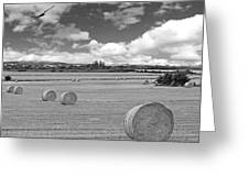 Harvest Fly Past Black And White Square Greeting Card