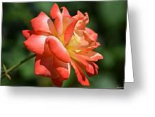 Harvest Rose Greeting Card