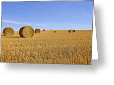 Harvest Season Greeting Card