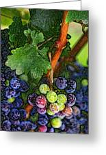 Harvest Time 1 Greeting Card