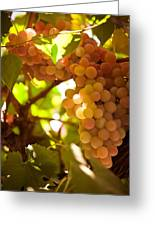 Harvest Time. Sunny Grapes IIi Greeting Card