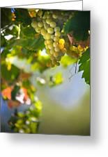 Harvest Time. Sunny Grapes V Greeting Card