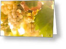 Harvest Time. Sunny Grapes Vi Greeting Card