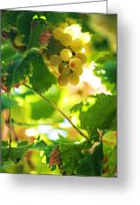 Harvest Time. Sunny Grapes Vii Greeting Card