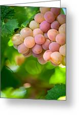 Harvest Time. Sunny Grapes Viii Greeting Card