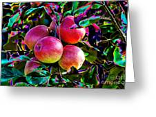 Harvesting Apples Greeting Card