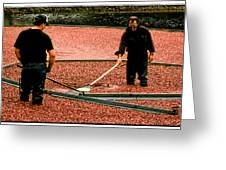 Harvesting Cranberries Greeting Card