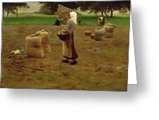 Harvesting Potatoes Oil On Canvas Greeting Card