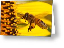 Harvesting Sunflower Pollen Greeting Card