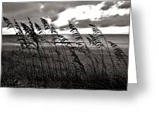 Hatteras Island Sunrise 18 9/3 Greeting Card