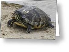 Hatteras Turtle 2 Greeting Card
