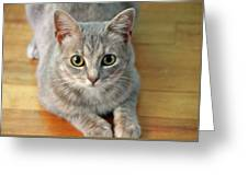 Hattie The Kitty Greeting Card