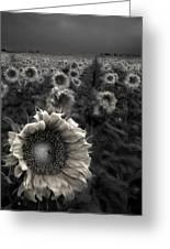Haunting Sunflower Fields 1 Greeting Card
