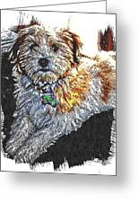 Havanese Puppy Greeting Card