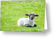 Have You Any Wool Greeting Card