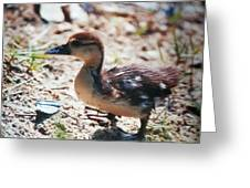 Lost Baby Duckling Greeting Card