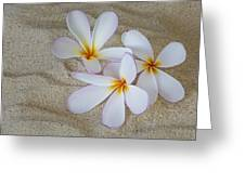 Hawaiian Tropical Plumeria Greeting Card
