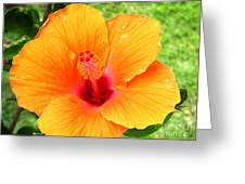 Hawaii Orange Hibiscus Greeting Card