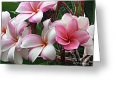 Hawaii Plumeria Greeting Card