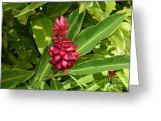 Hawaii Ti Flower Greeting Card