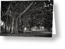 Hawaiian Banyan Tree Root Study Greeting Card by Daniel Hagerman