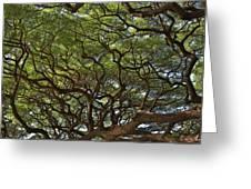 Hawaiian Banyan Tree Greeting Card