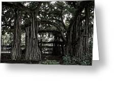 Hawaiian Banyan Trees Greeting Card