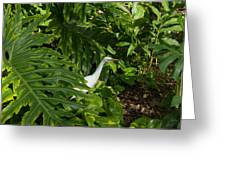 Hawaiian Garden Visitor - A Bright White Egret In The Lush Greenery Greeting Card