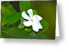 Hawaiian Gardenia Greeting Card