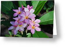 Hawaiian Lei Flower Greeting Card