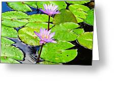 Hawaiian Lily Pads And Flowers_01 Greeting Card