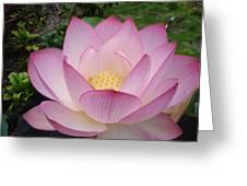 Hawaiian Lotus Greeting Card