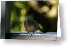 Hawaiian Mourning Dove Greeting Card
