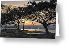 Hawaiian Nights Greeting Card