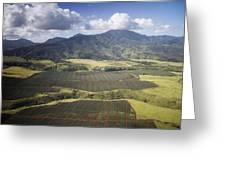 Hawaiian Pineapple Fields Greeting Card
