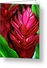 Hawaiian Red Torch Ginger Greeting Card
