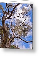 Hawaiian Sky Greeting Card