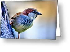 Hawaiian Sparrow Greeting Card