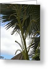 Hawaiiana 18 Greeting Card