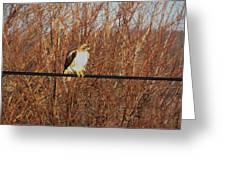 Hawk #22 Greeting Card
