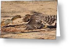 Hawk Attack Greeting Card